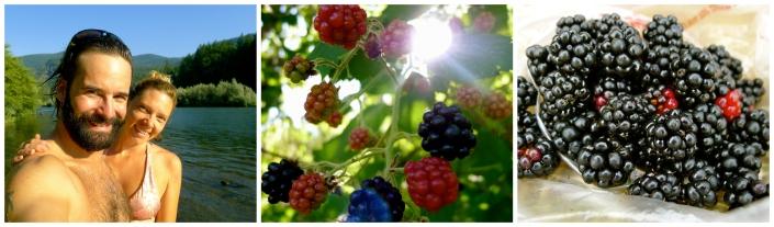 berriesCollage